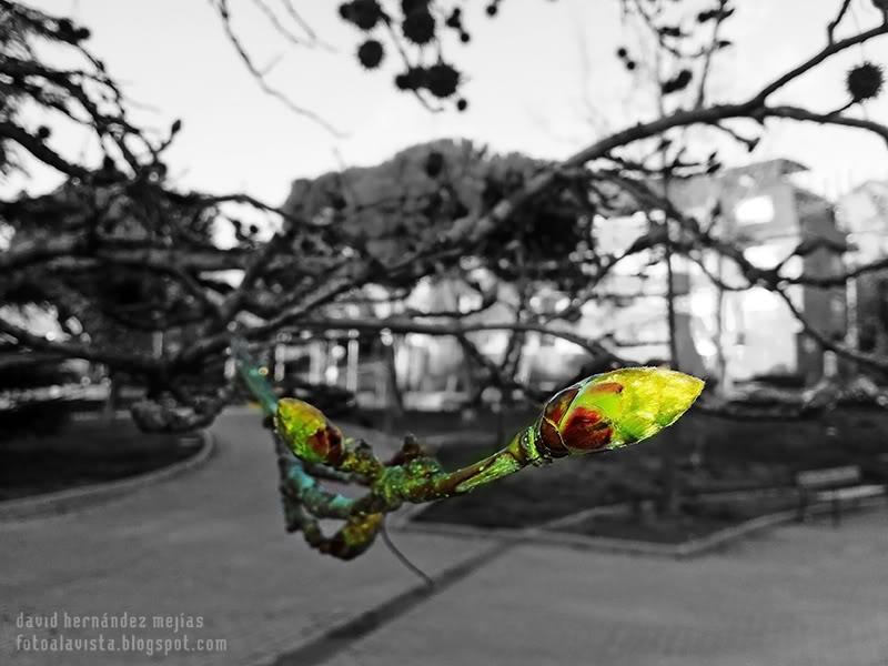 Verdes retoños brotan