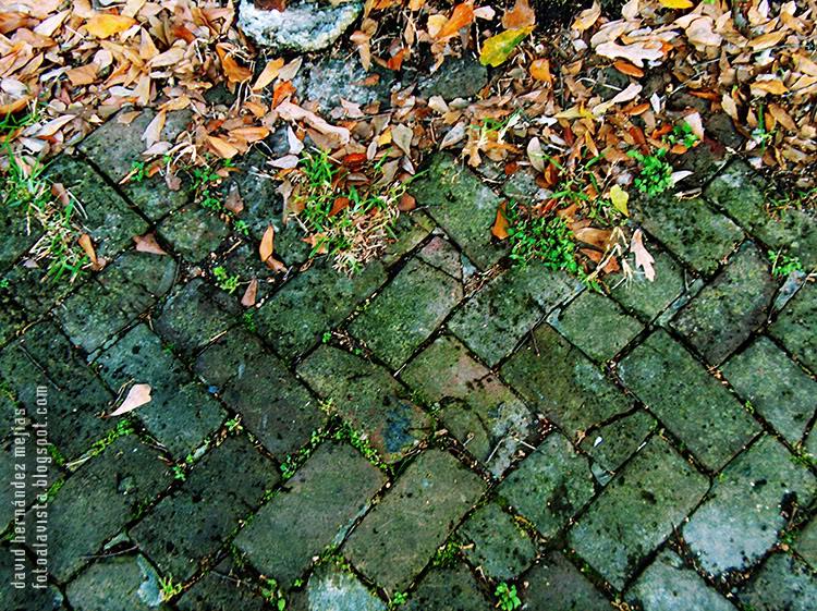 Detalle de suelo pavimentado con hojas y hierbas en Nueva Orleans, Estados Unidos