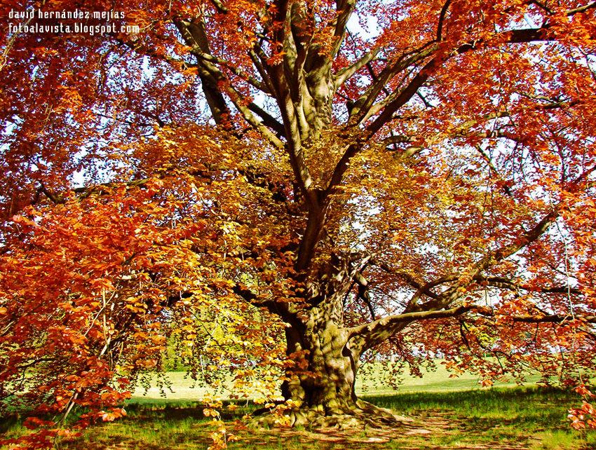 El árbol transmutador