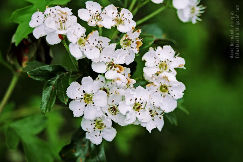 Pequeñas flores blancas que hacen formas
