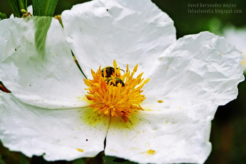 Estambres, polen y un bicho
