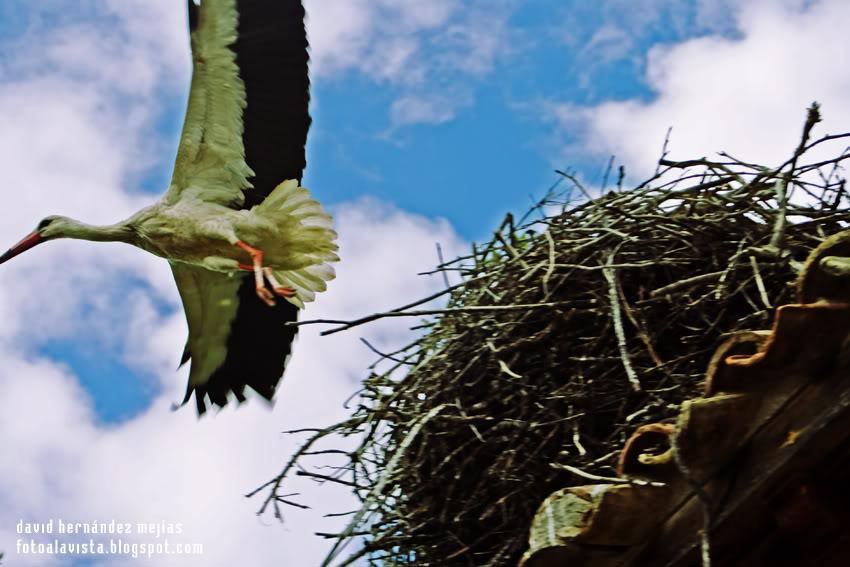 Abandonando el nido