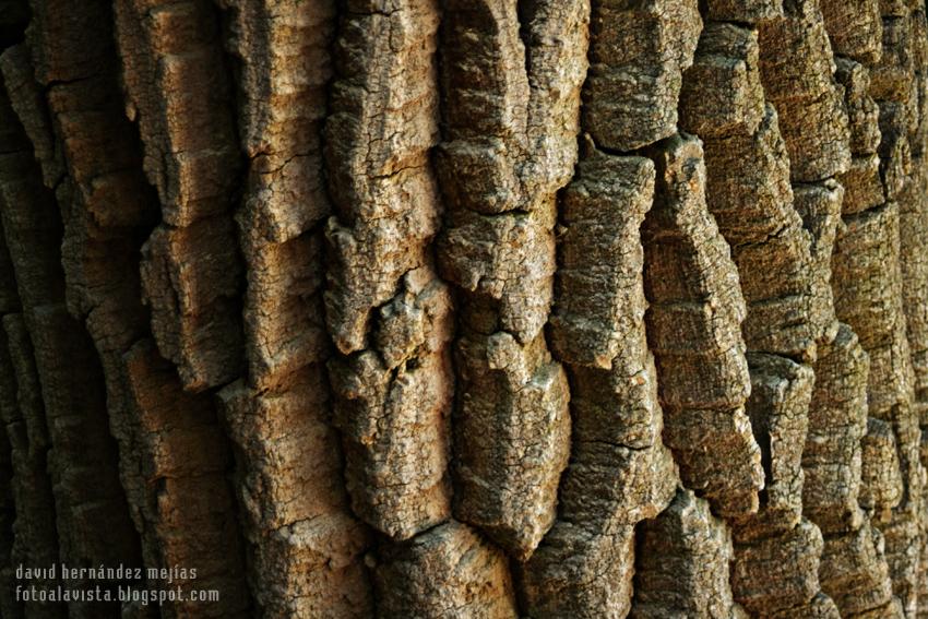 Vericuetos de la piel de un árbol