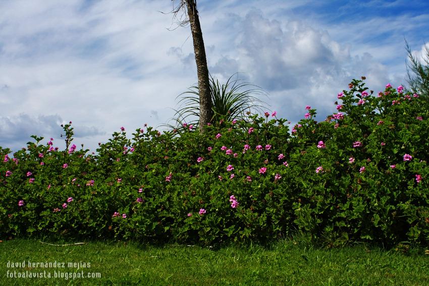 Colocando vallas de flores al cielo