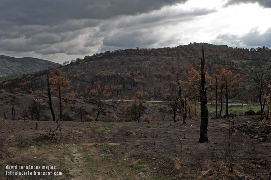 Naturaleza muerta... por el fuego