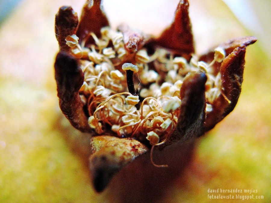 Cual brotes germinados en corona