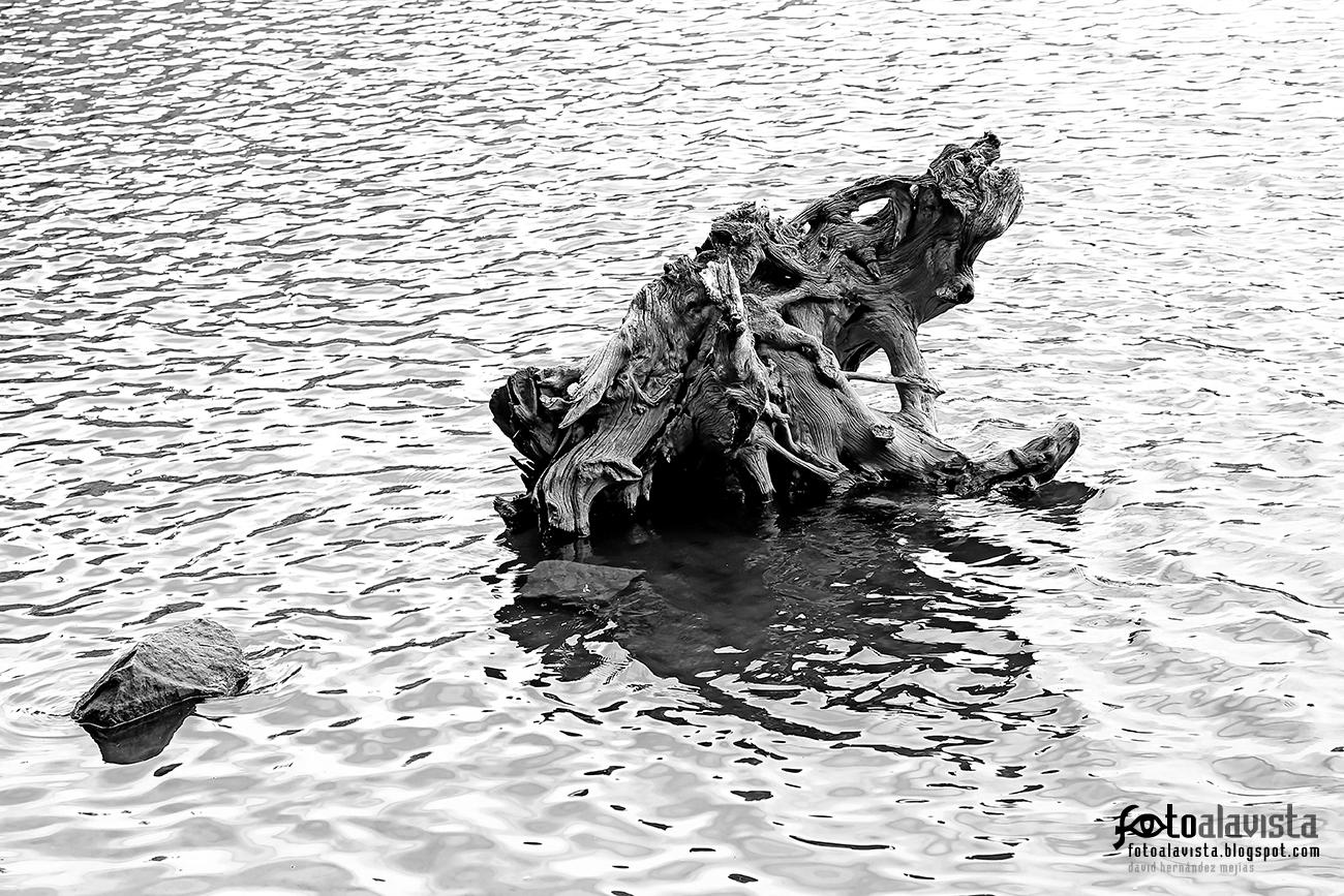 Historia de un viejo árbol - Fotografía artística