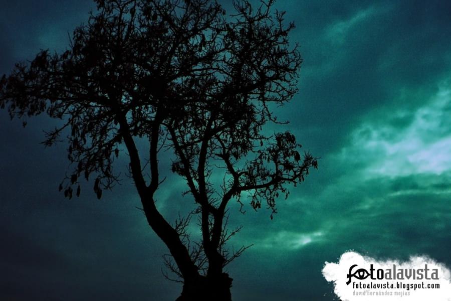 Árbol en la noche oscura