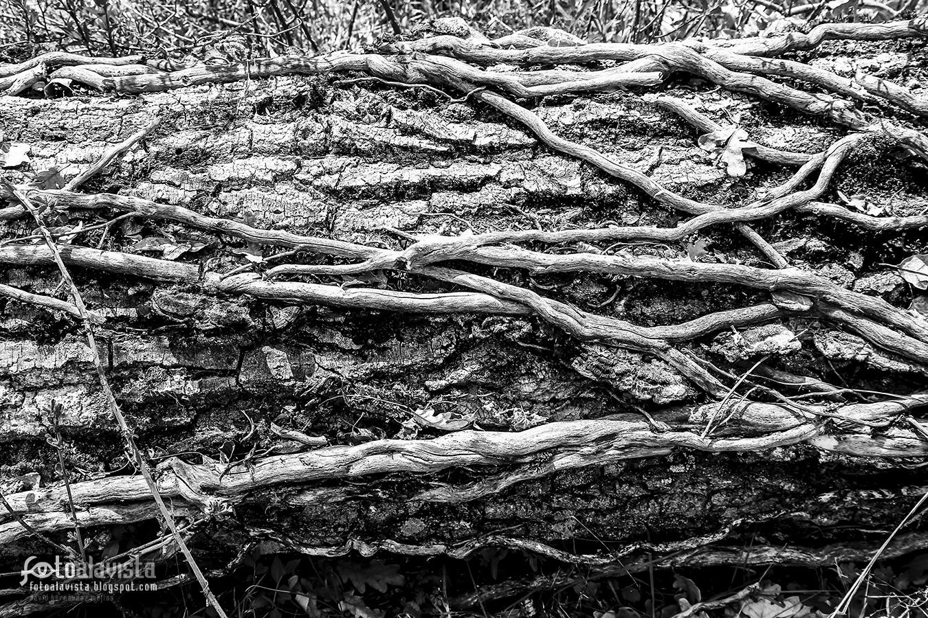 Reforzando el tronco naturalmente - Fotografía