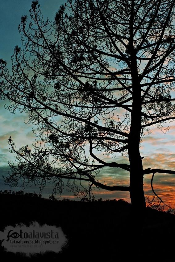 De noche no se ve el árbol quemado