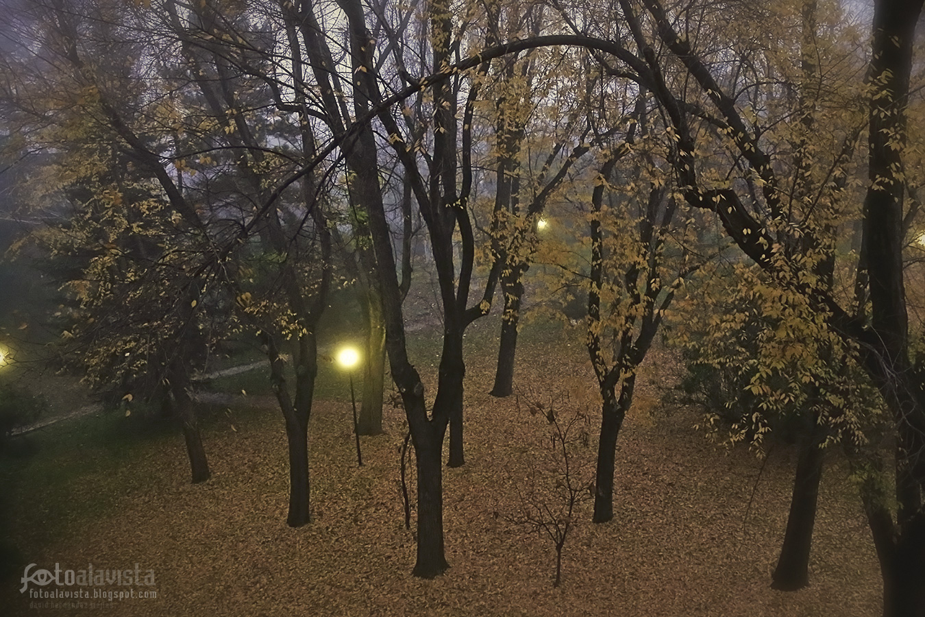 Luces mágicas entre árboles y niebla - Fotografía