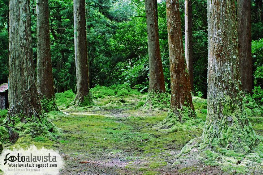 Inquietante pasillo arbóreo