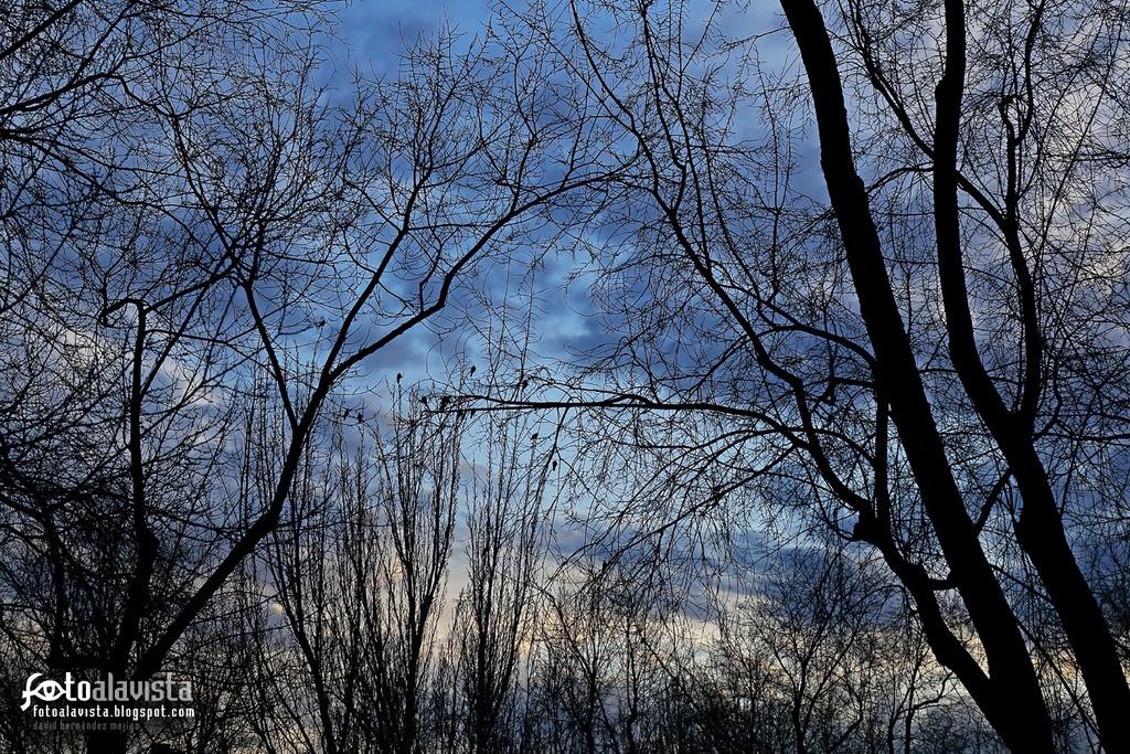 Aves desde mi ventana. Fotografía creativa - Fotografía artística