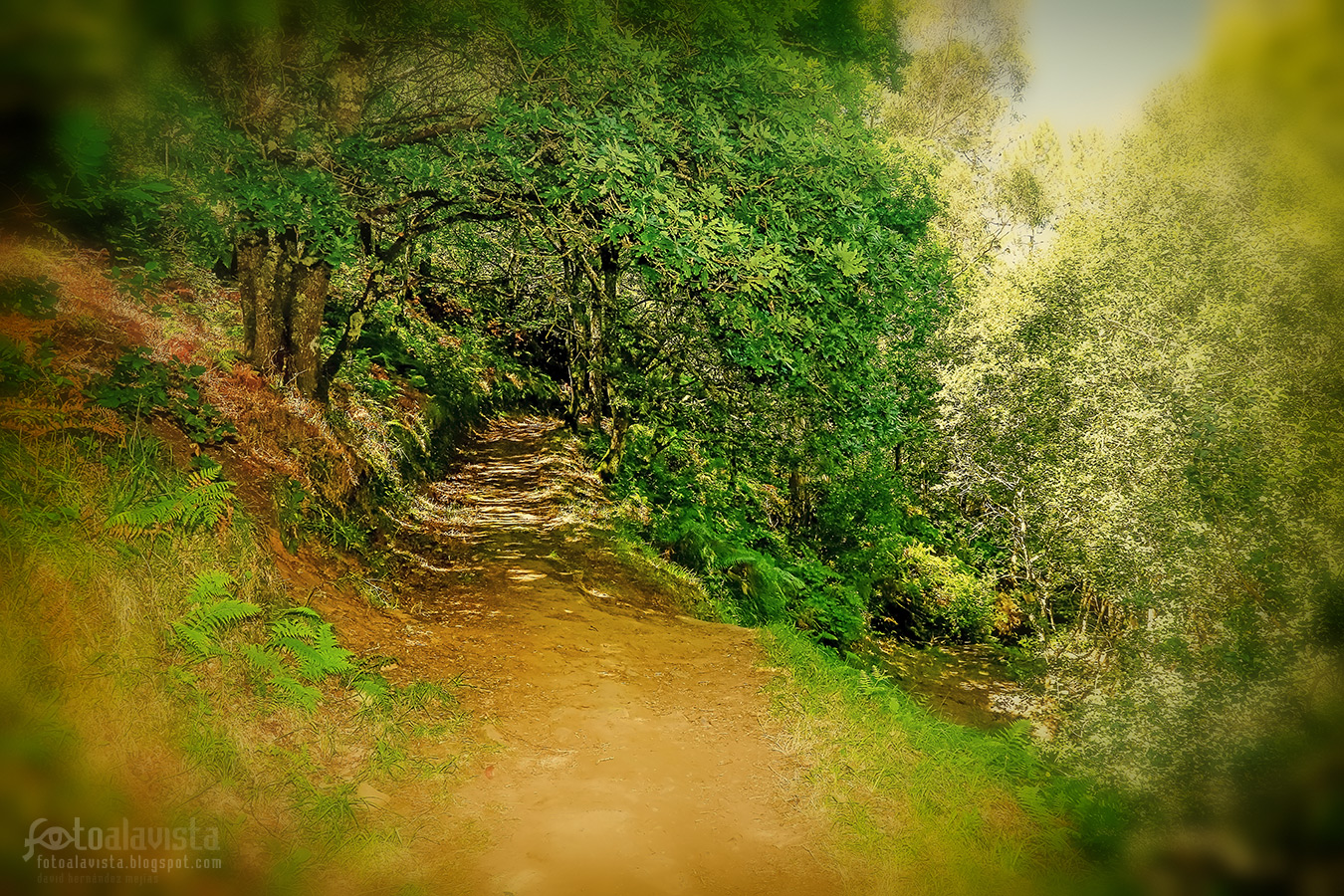 El camino que se adentra al bosque - Fotografía