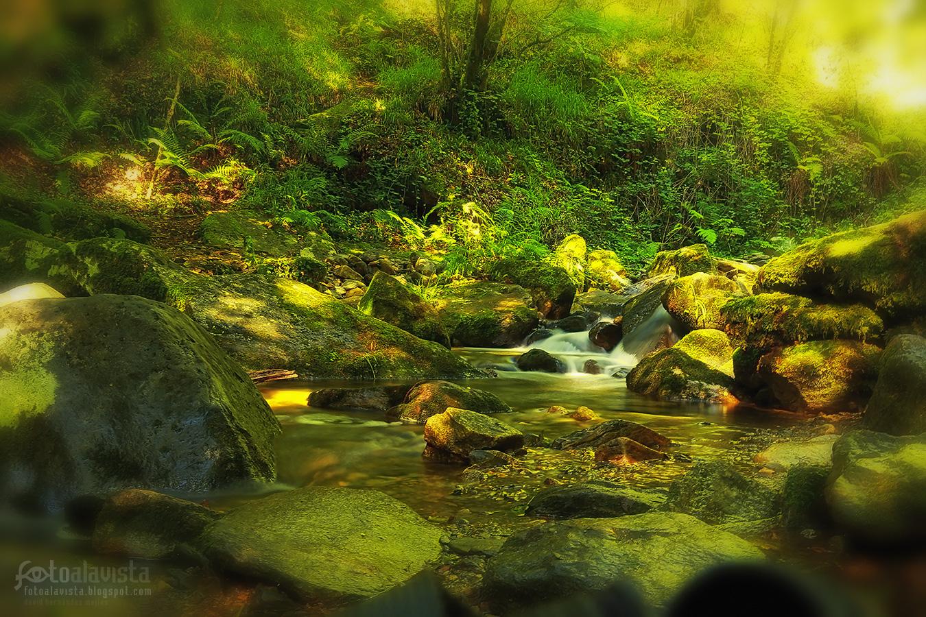 La magia del bosque - Fotografía