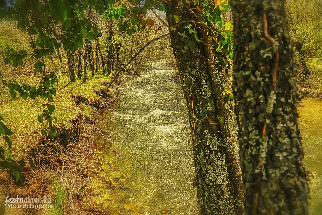 El río entre árboles - Fotografía