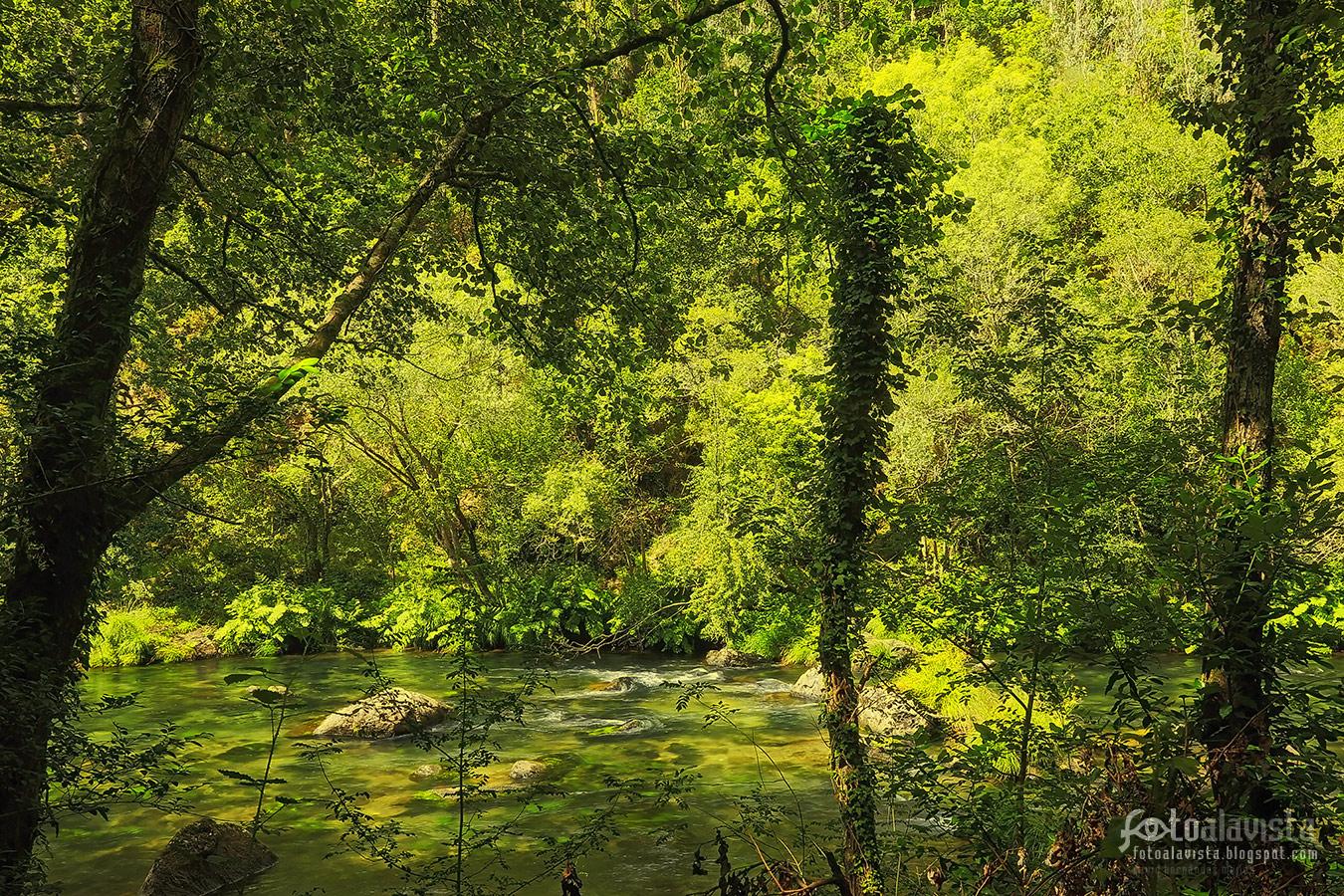 El río camuflado - Fotografía