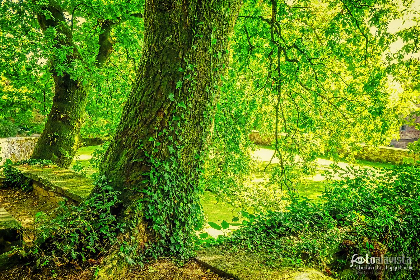 Verde rincón romántico - Fotografía