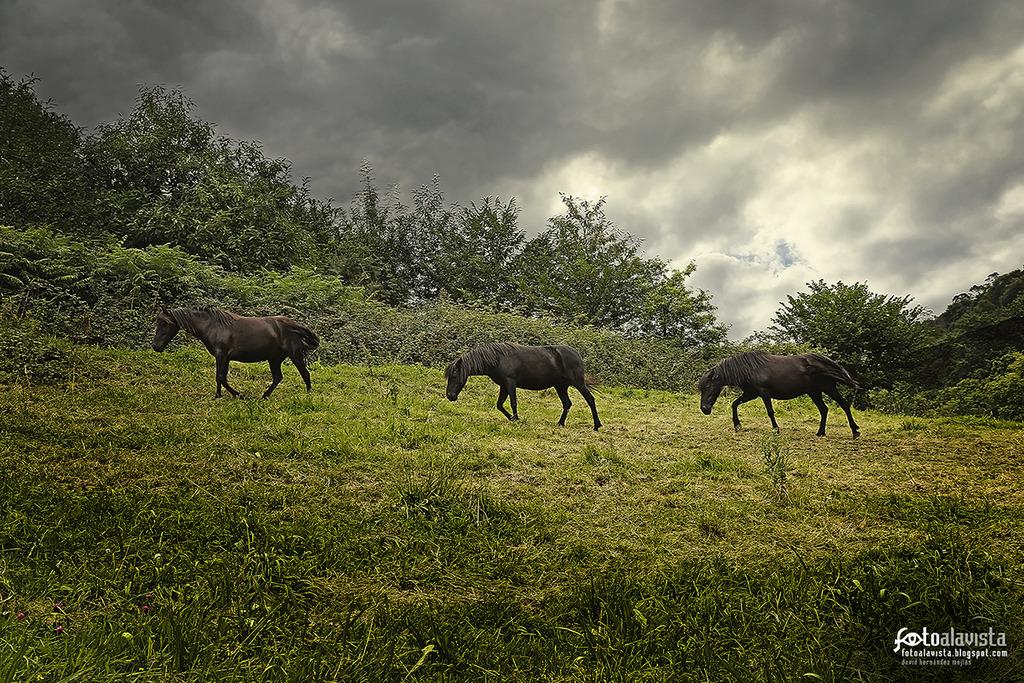 Entre caballos - Fotografía artística