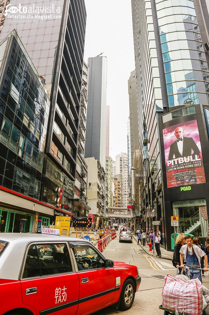 Calle con Pitbull - Fotografía artística