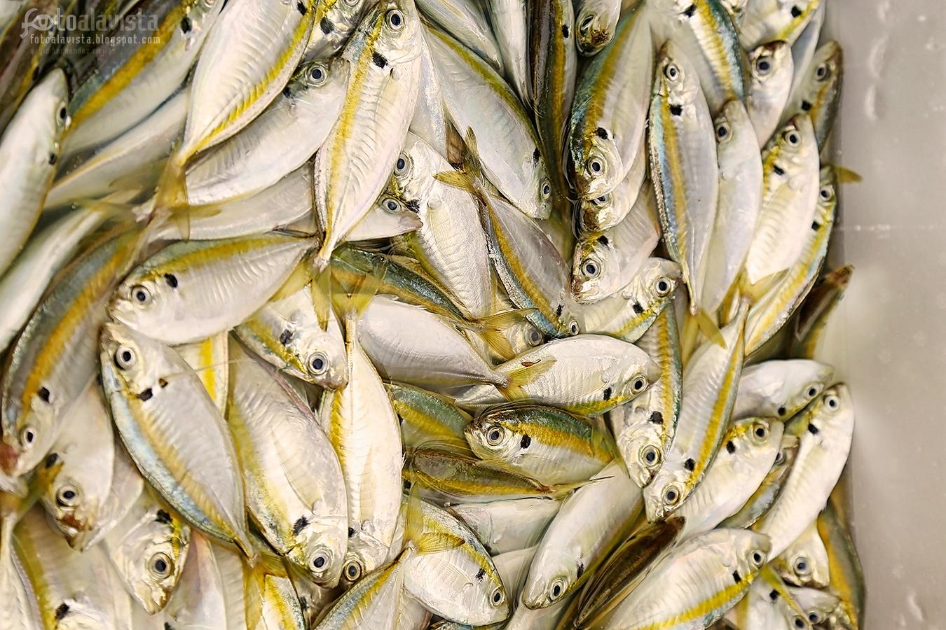 El milagro de los peces - Fotografía
