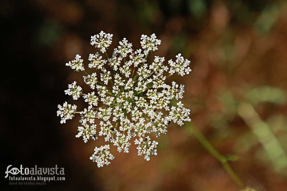 Copo de nieve floral de verano. Fotografía creativa - Fotografía decorativa - fotografía infantil