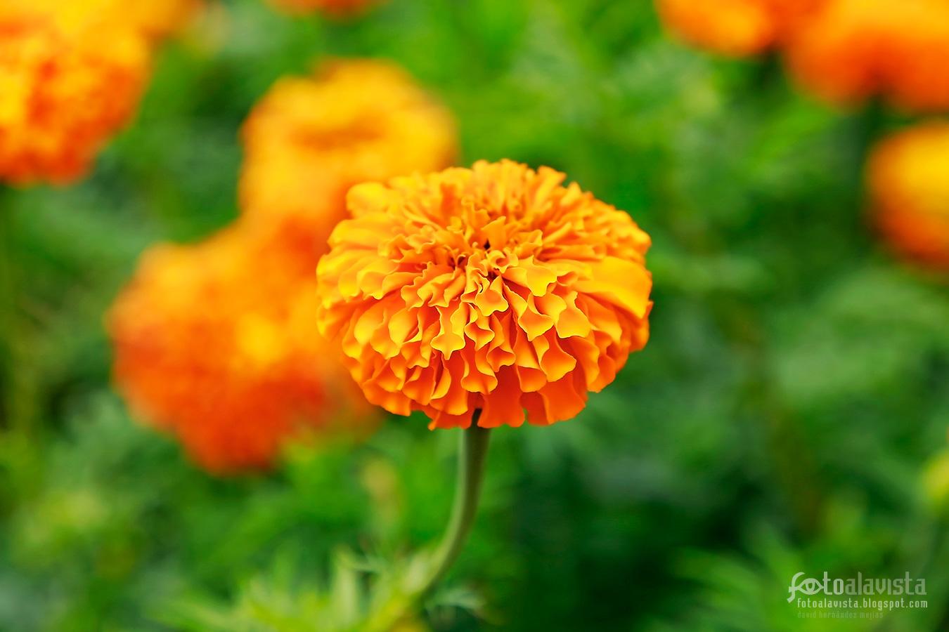 Flor naranja como de papel - Fotografía