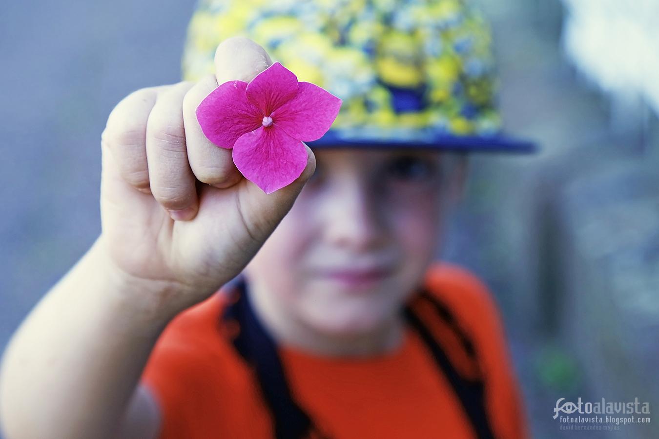Toma una flor - Fotografía