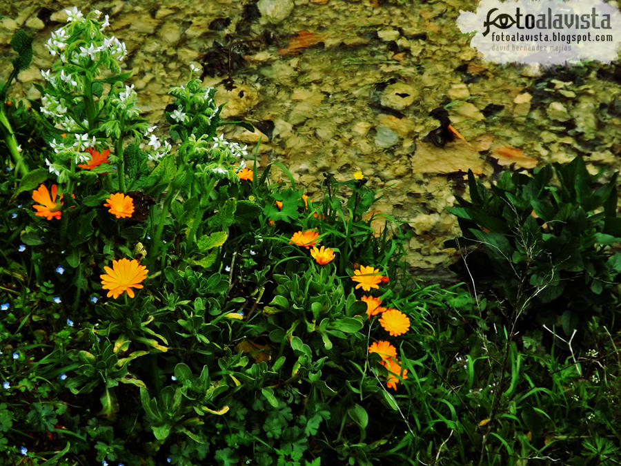 Flores de agua cristalina