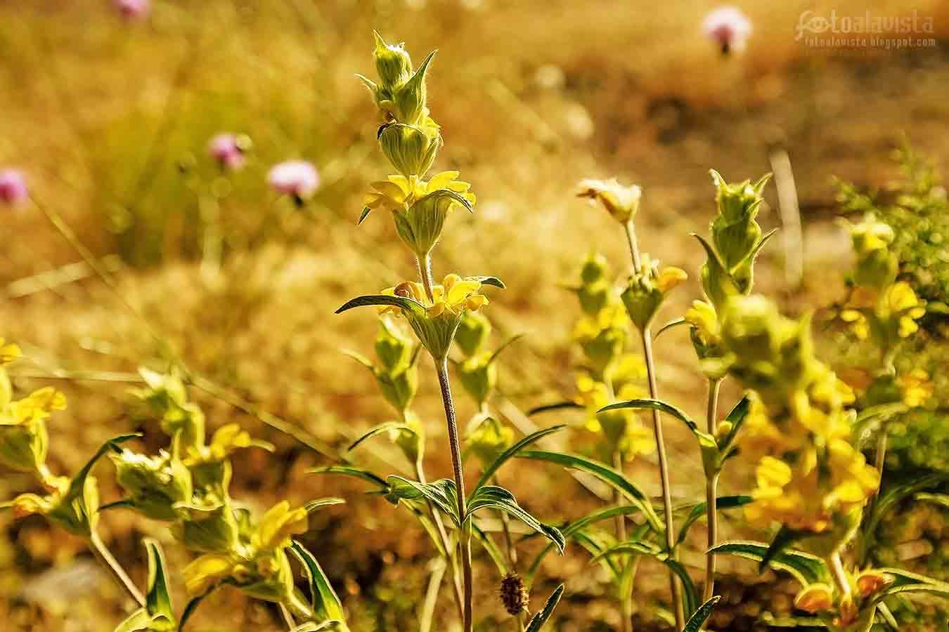 Flores en dorado - Fotografía