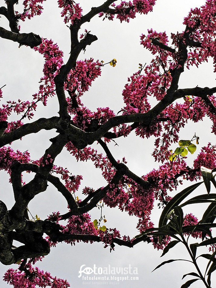 Árbol con flores en contrapicado - Fotografía artística