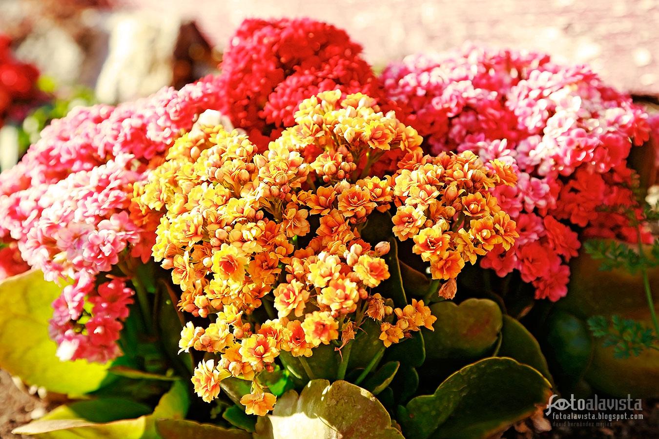 Pequeñímas flores amarillas y rojas - Fotografía