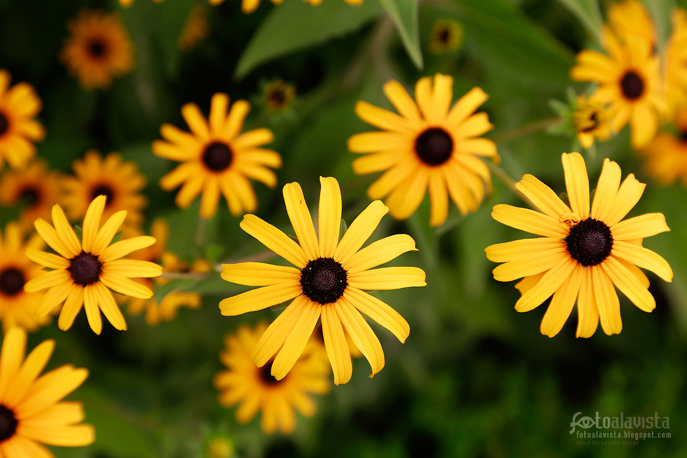 Flores amarillas silvestres - Fotografía