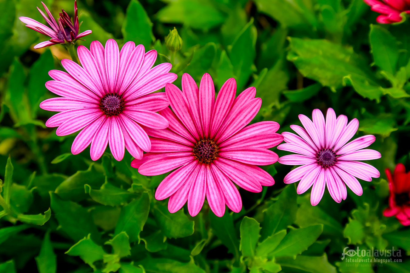 Familia floral - Fotografía