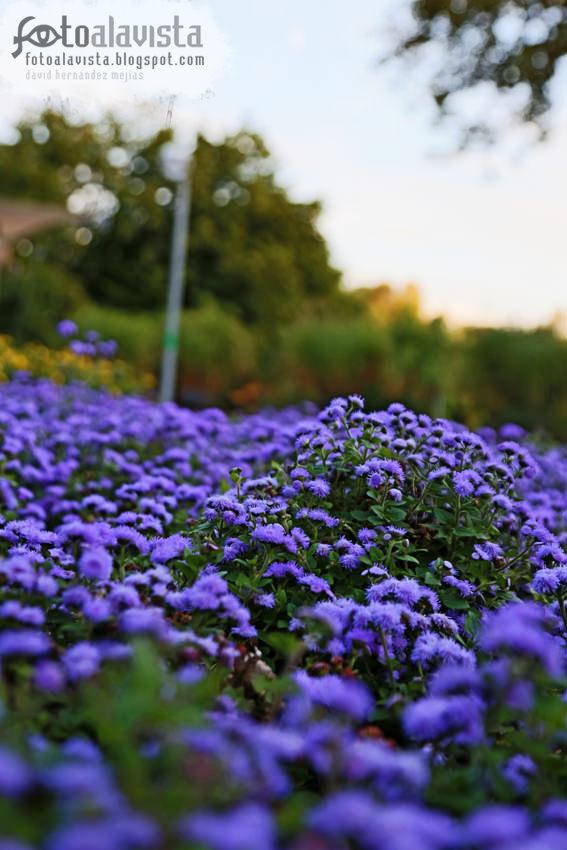Flores de paz y transformación
