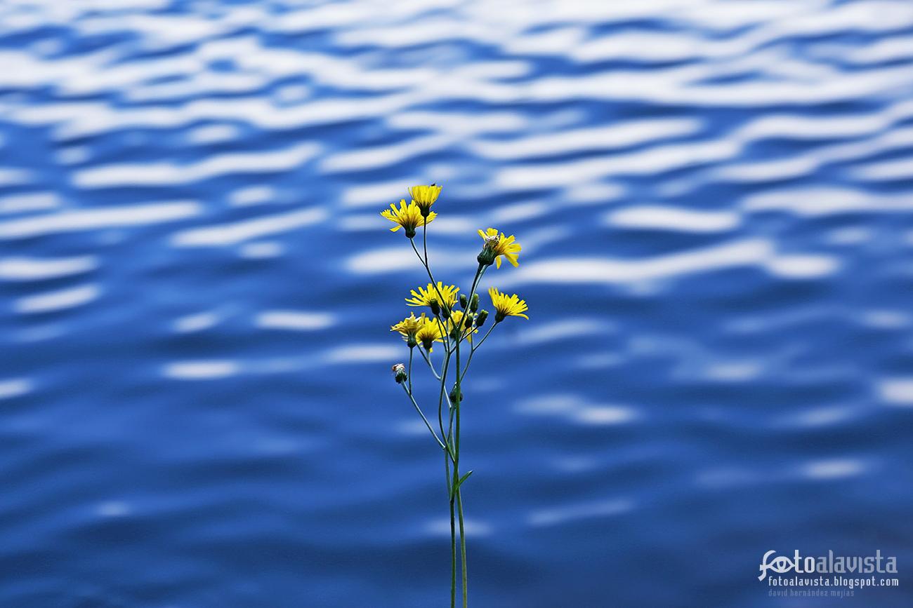 Ante la fantasía del telón de agua - Fotografía artística
