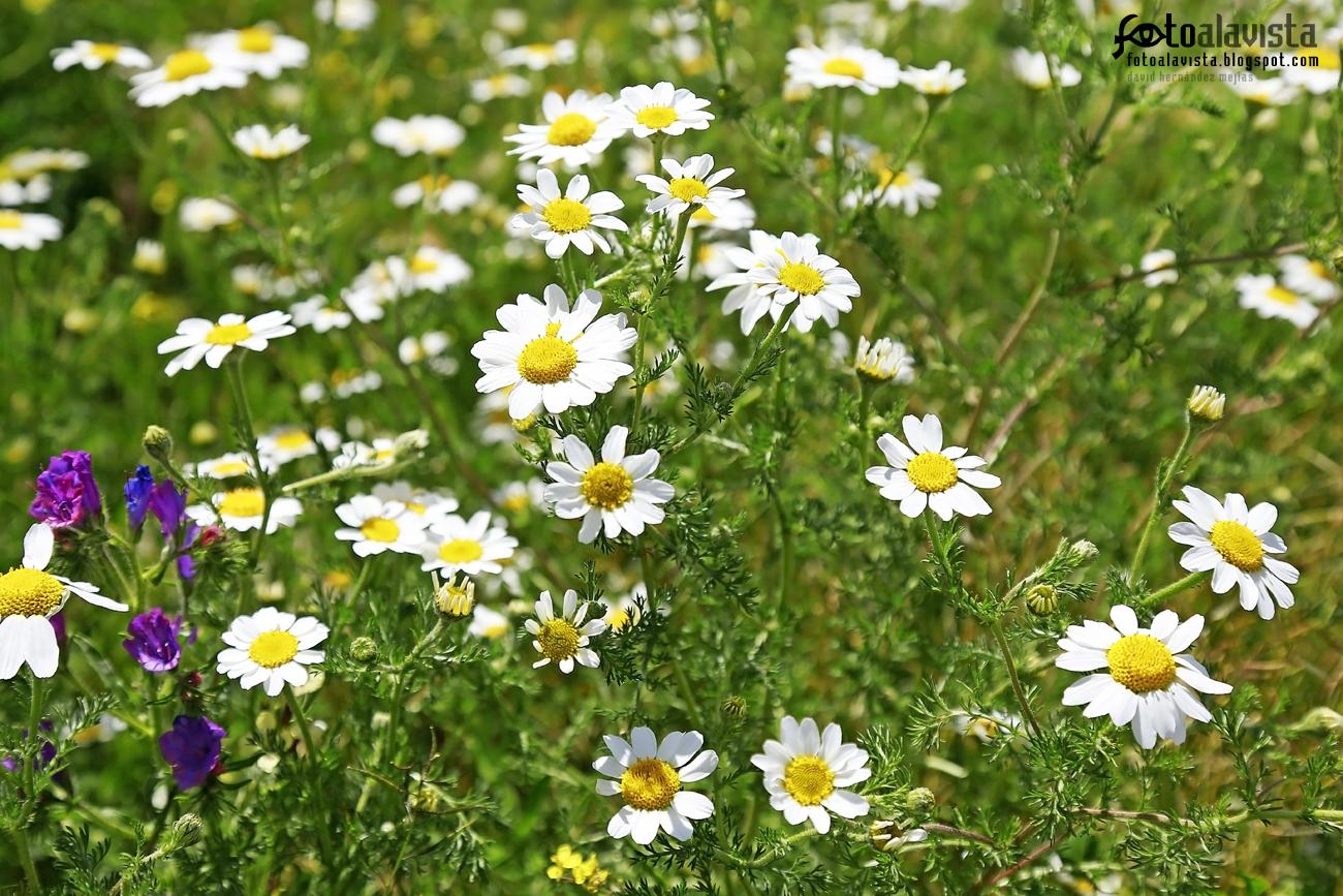 Floral sobre verde. Fotografía creativa - Fotografía artística