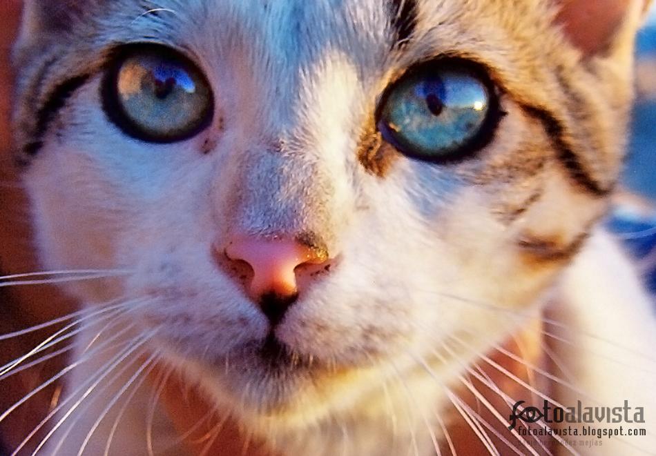 Gato con historia. Fotografía creativa - Fotografía decorativa