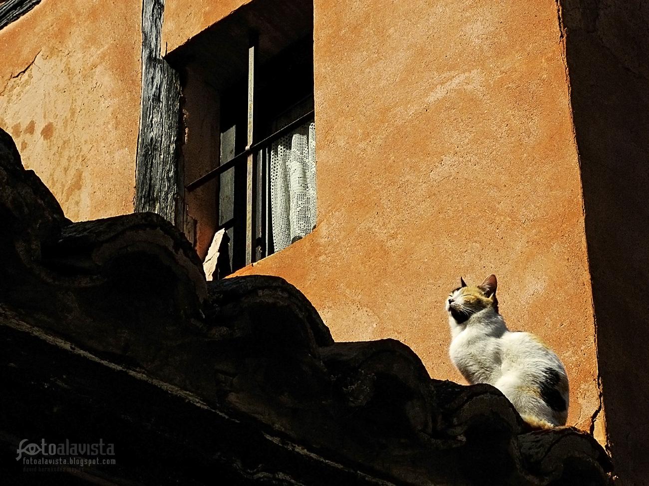 El gato que está tomando el sol en el tejado - Fotografía