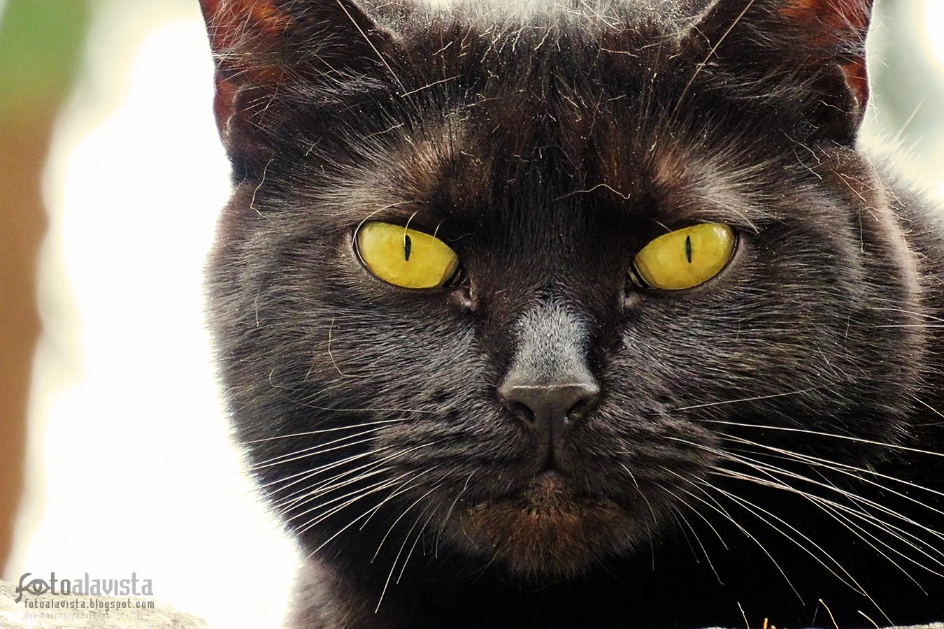 Cabeza de gato callejero - Fotografía