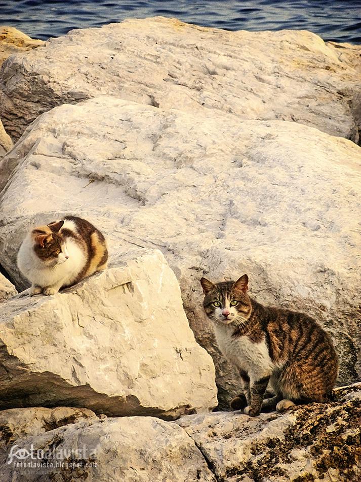 Gatos marineros - Fotografía artística