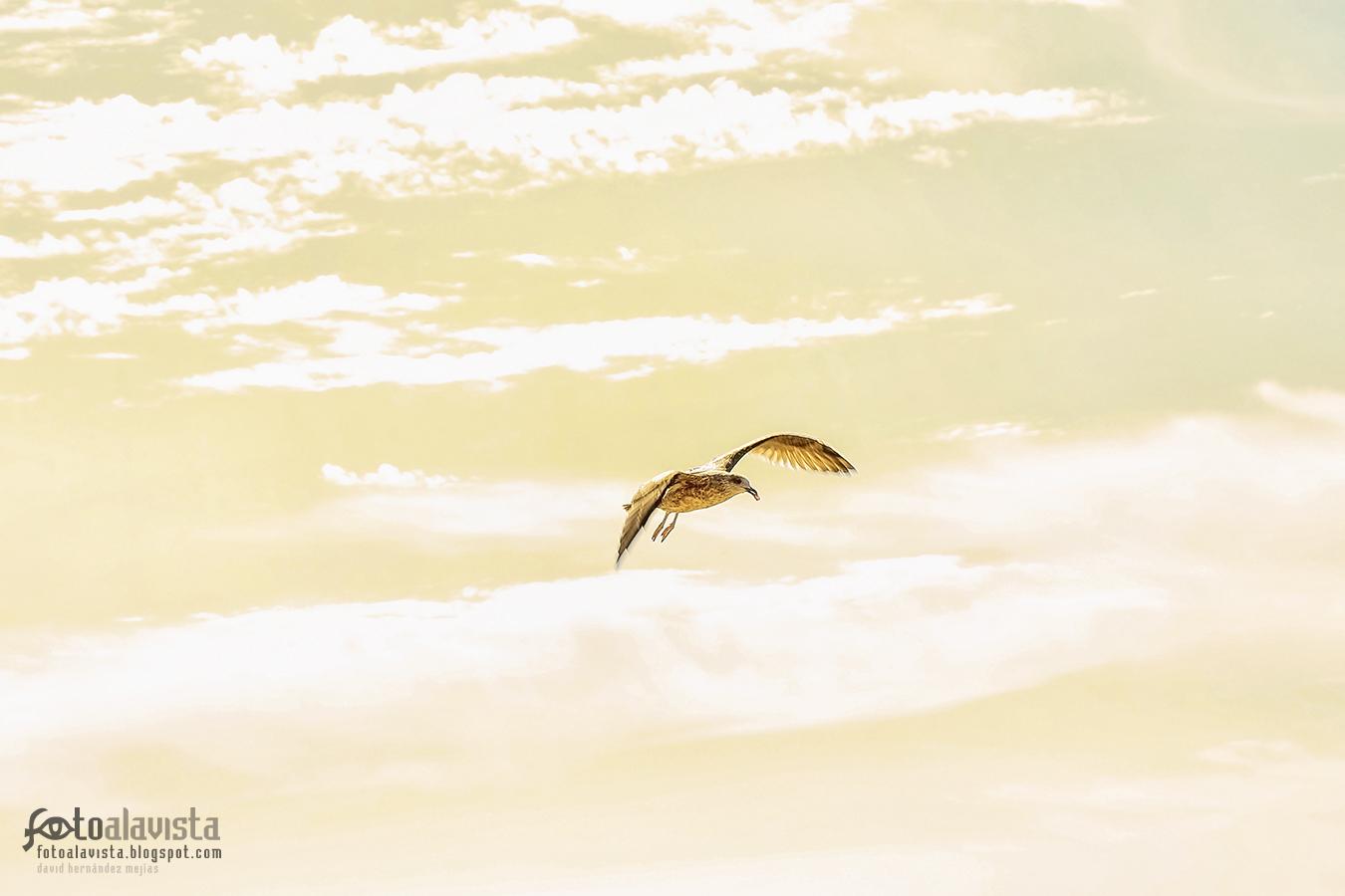 Volando libre en un mar de nubes - Fotografía artística