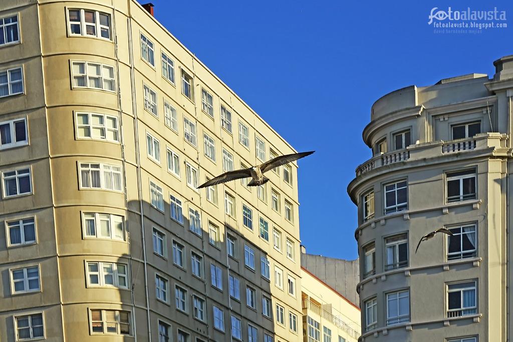 Volando entre altos edificios distorsionados. Fotografía creativa - Fotografía artística