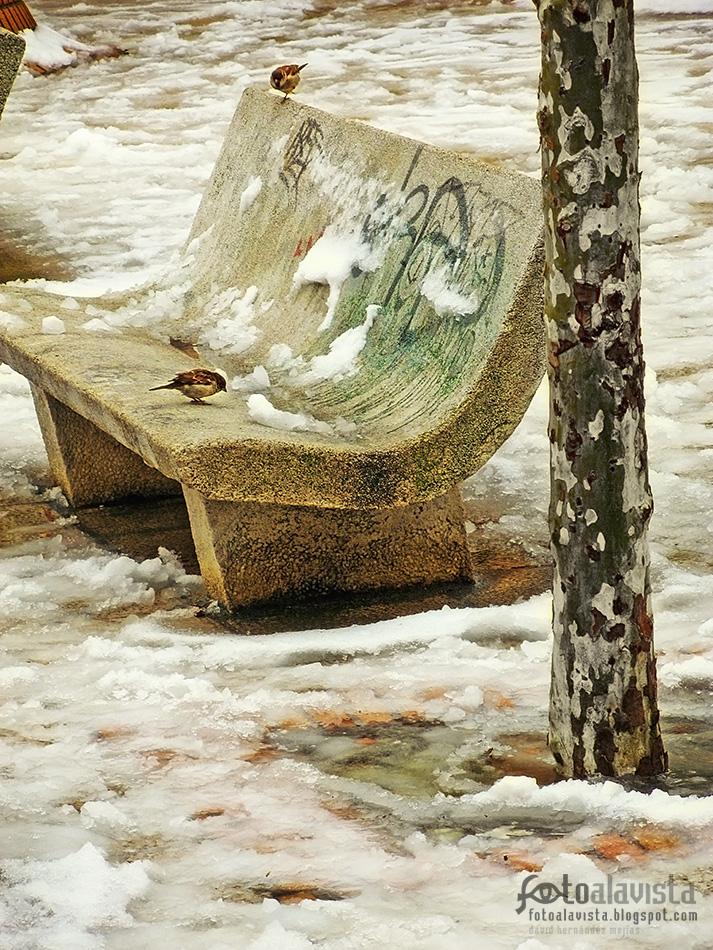 Gorriones en el banco de nieve - Fotografía artística