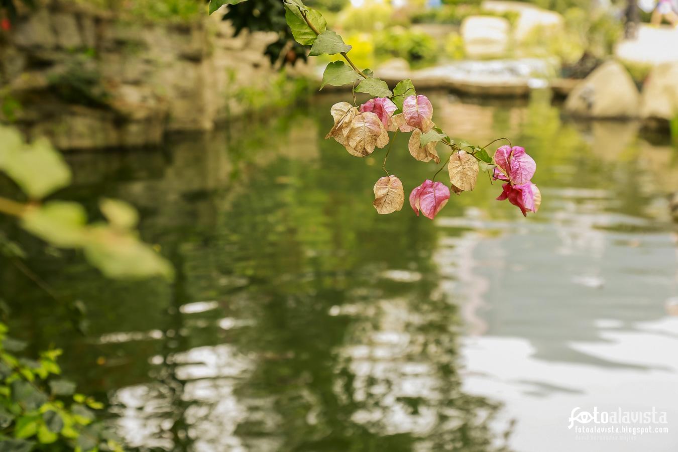 Dejando flores por el camino - Fotografía artística