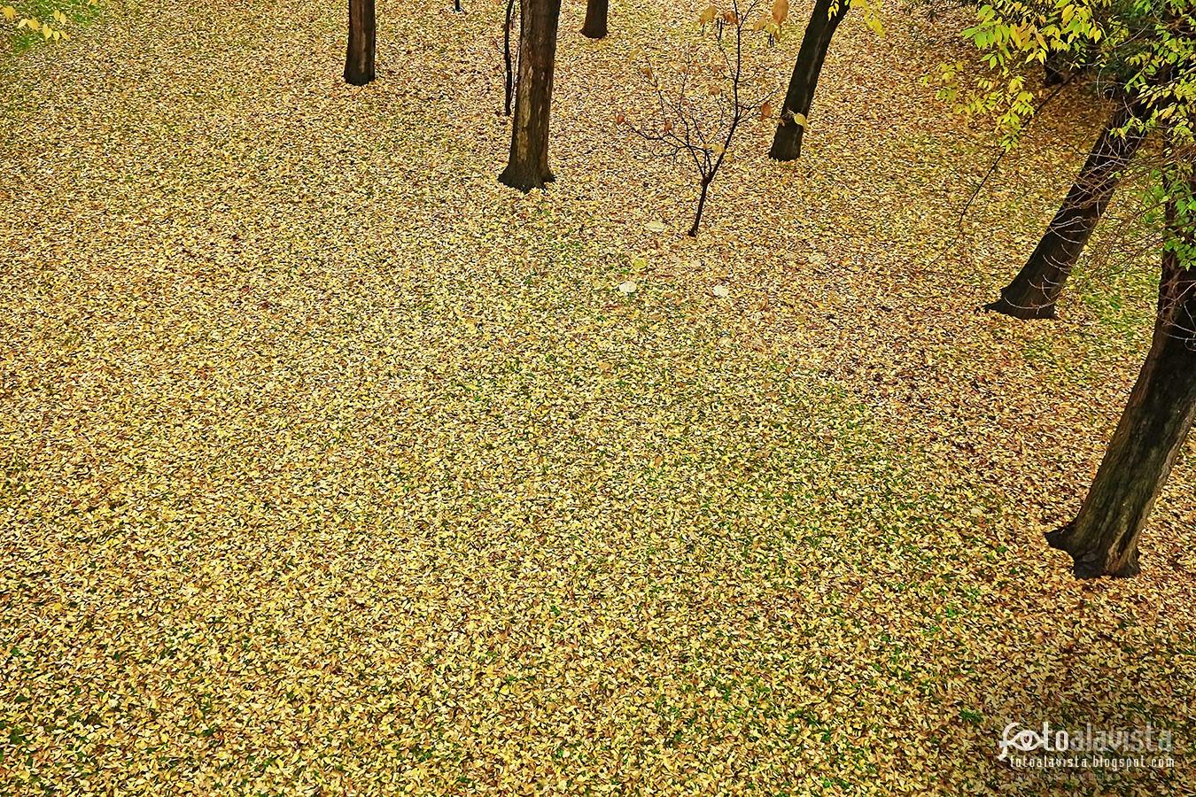 Manto de hojas con casi minimalismo estacional - Fotografía artística