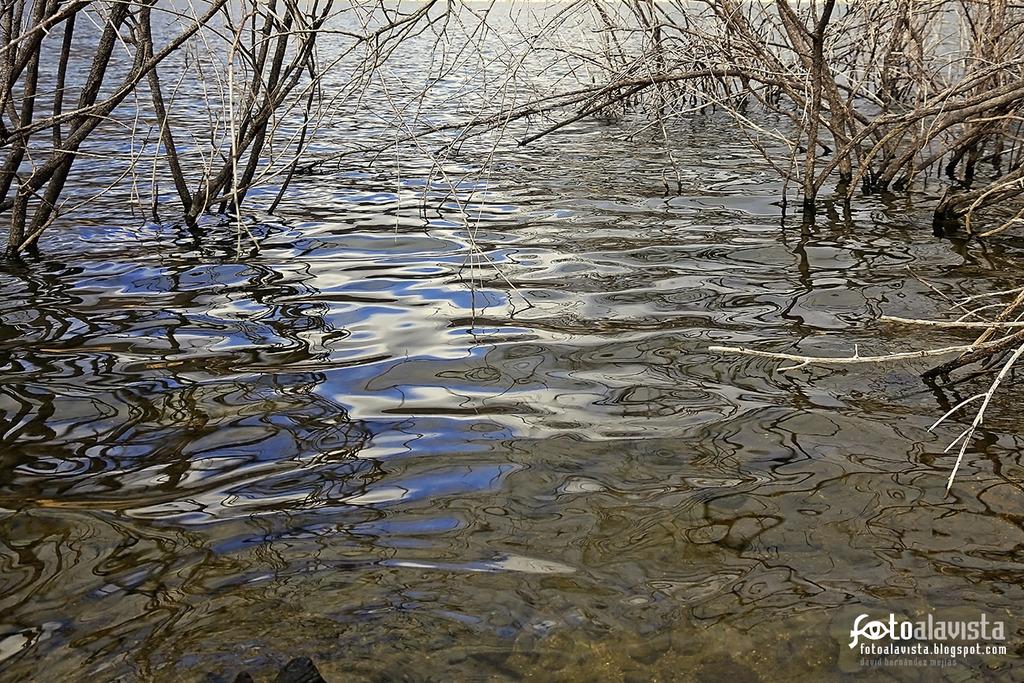 Sobresaliendo entre las ondas - Fotografía artística
