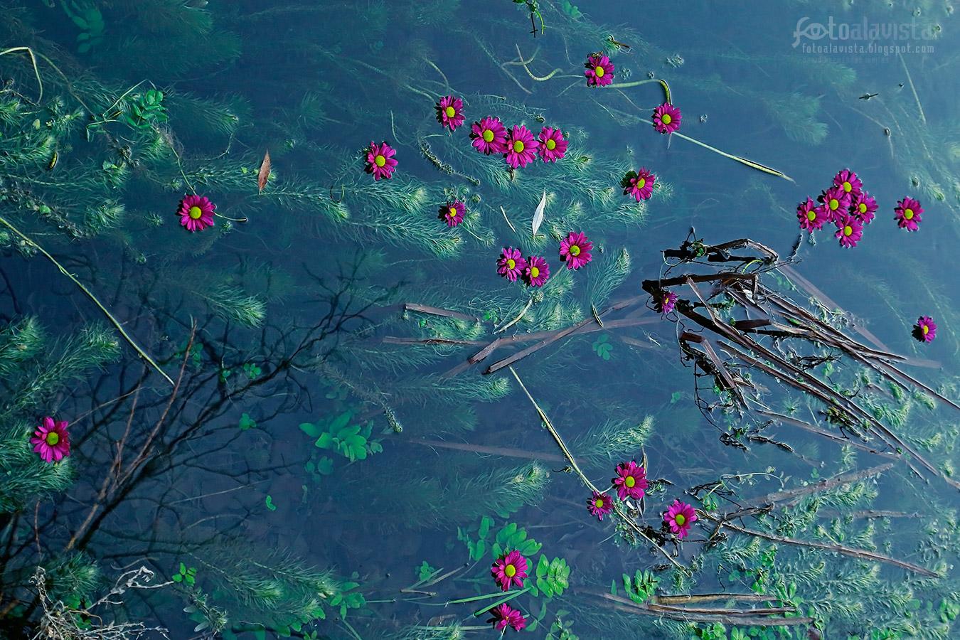 Laguna con flores Prerrafaelita - Fotografía