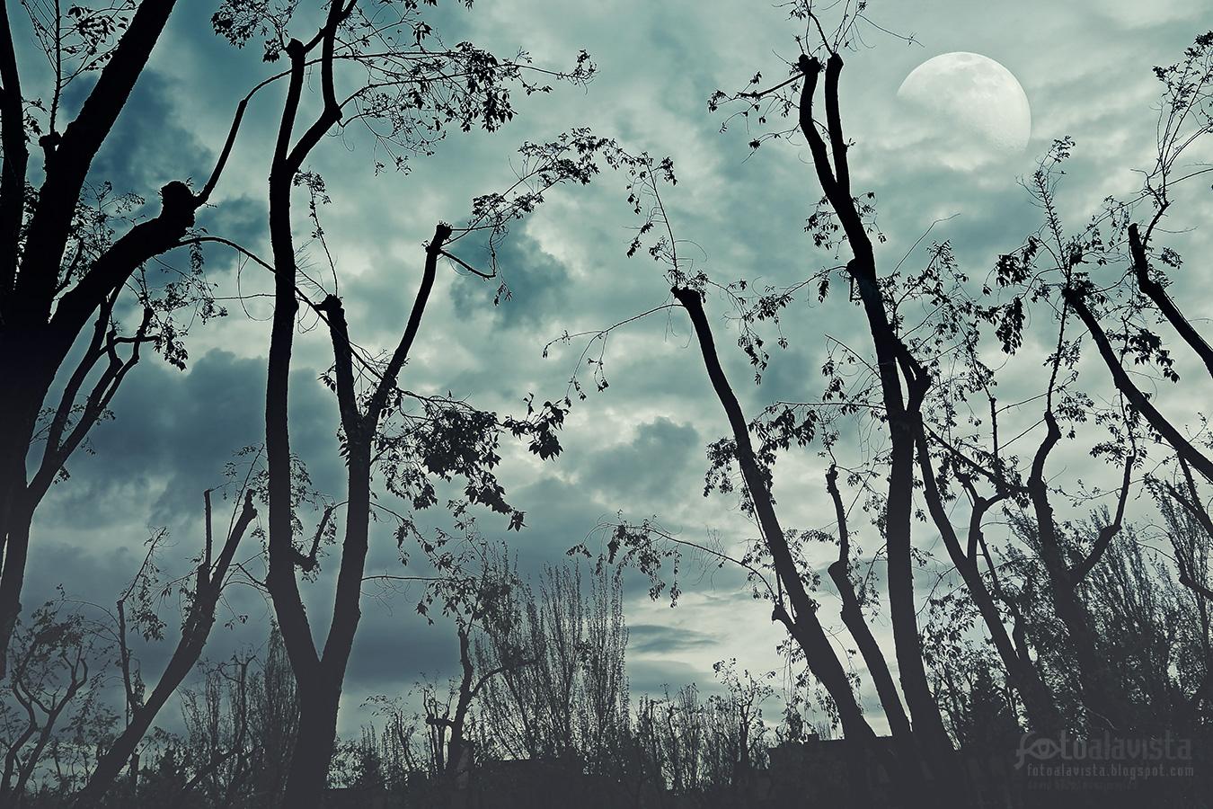 Noche de lobos - Fotografía