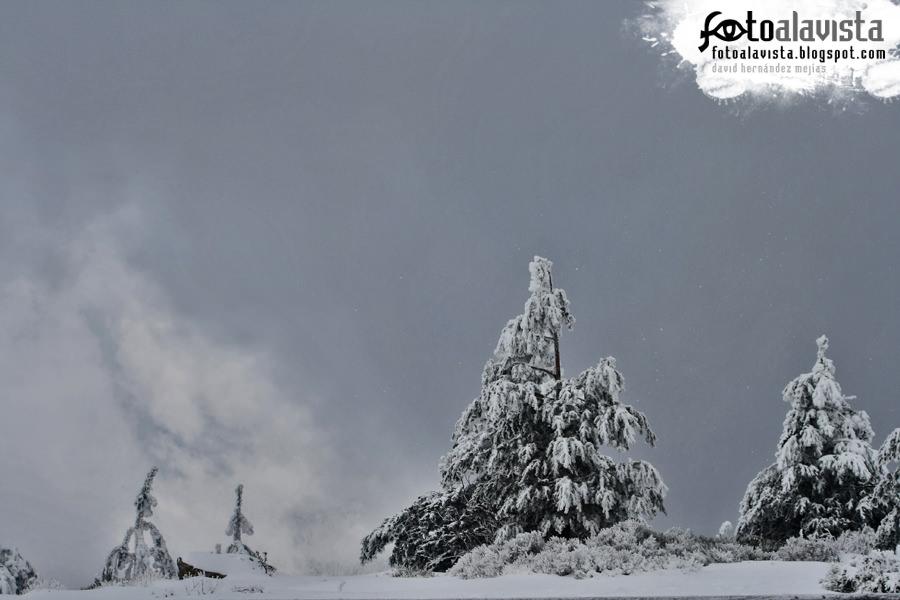 Nubes, nieve y árboles